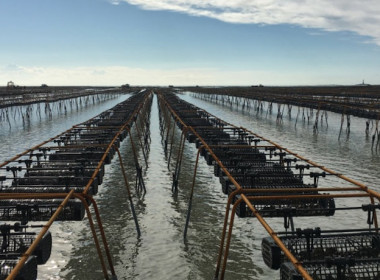 aquaculture mariculture fish farm