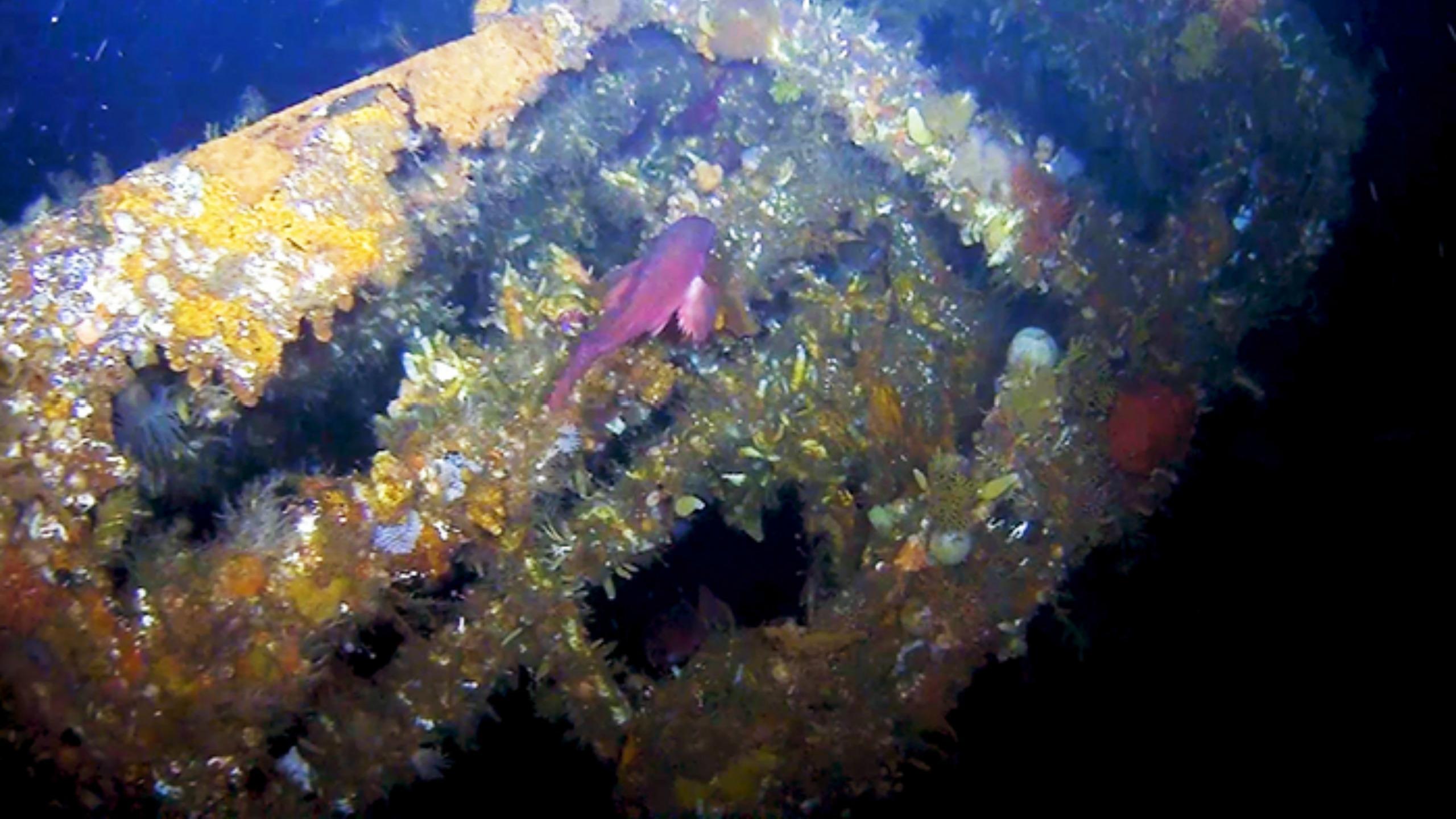 Coral-encrusted USS Abner Read stern wreckage
